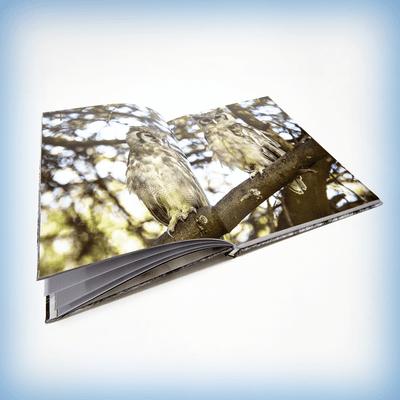 многостраничная продукция - книги